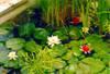 lilii.jpg