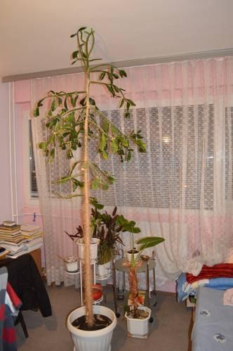 kaktus1.JPG