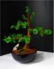 bonsai-2a.jpg