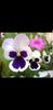 Screenshot_20180310-215928.png
